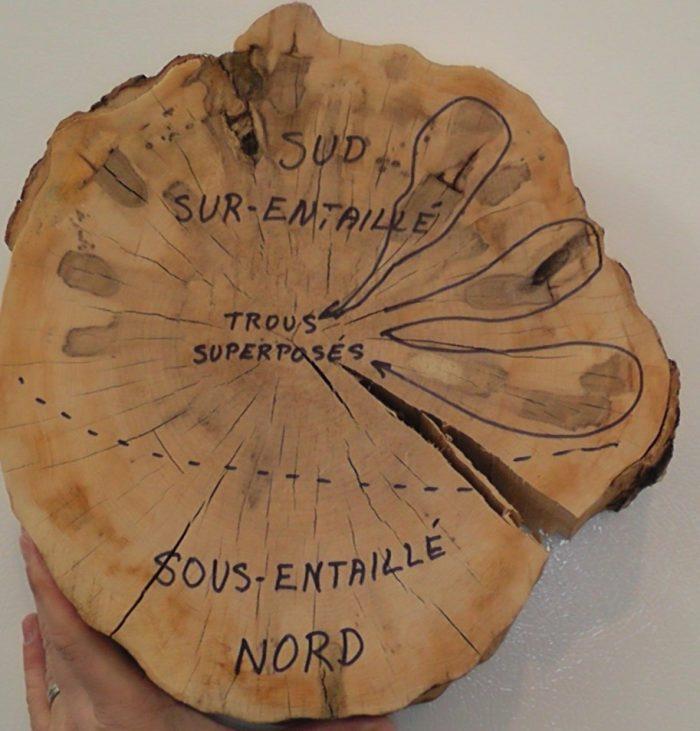 Exemple d'érable sous-entaillé au Nord